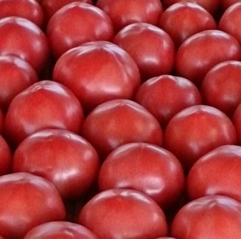 まさに旬!地元産トマトを食べましょう!!