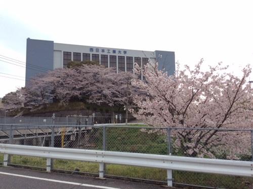 桜満開!!桜花繚乱!街中サクラ大戦☆