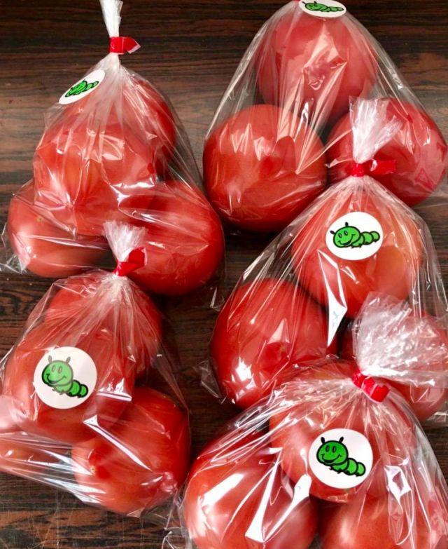 リコピンたっぷり真っ赤なトマトの季節到来!